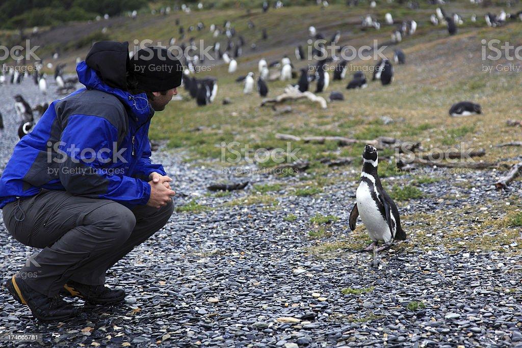 Man Tourist Looking at Penguin stock photo