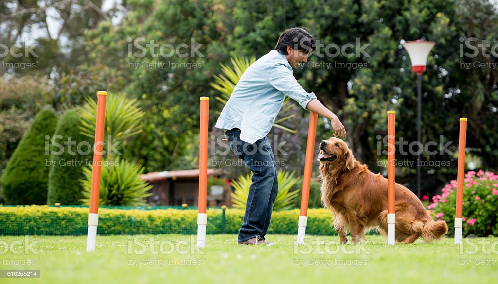 Man training a dog at an obstacle course stock photo