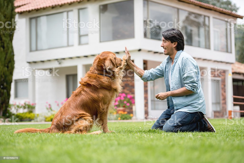 Man training a dog stock photo
