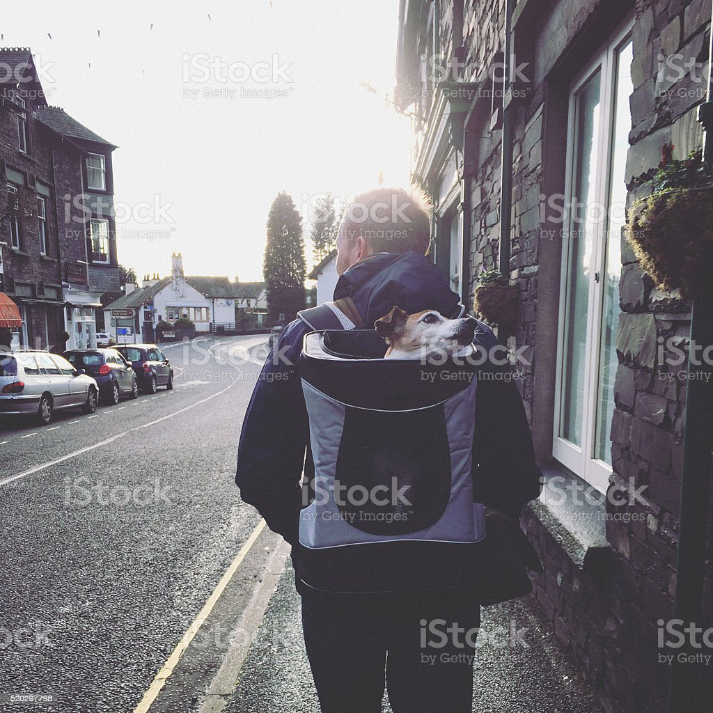 Man travels with senior dog in his backpack stock photo