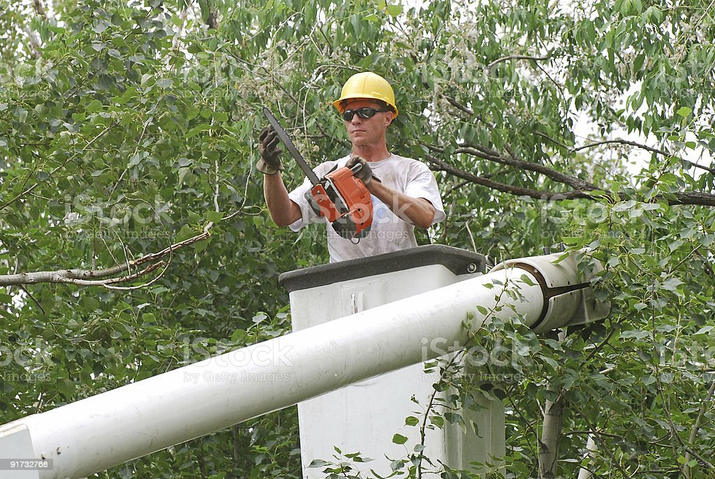 A man trimming a tree from a cherry picker  stock photo