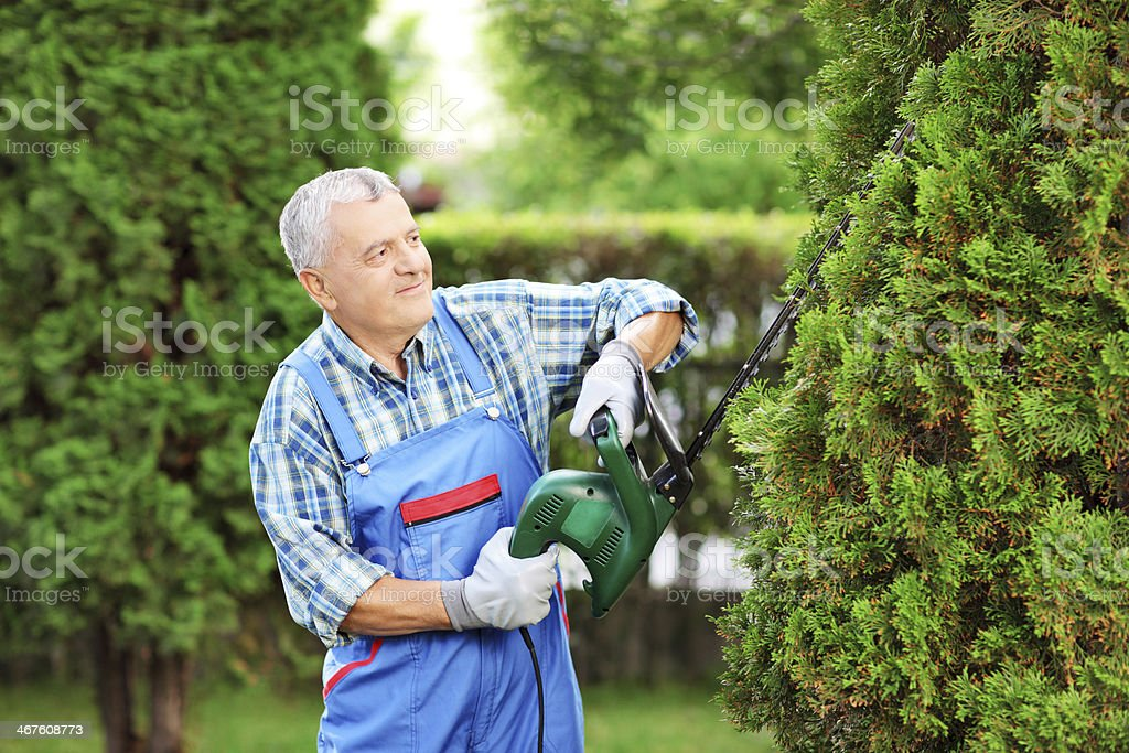 Man trimming a tree in garden stock photo