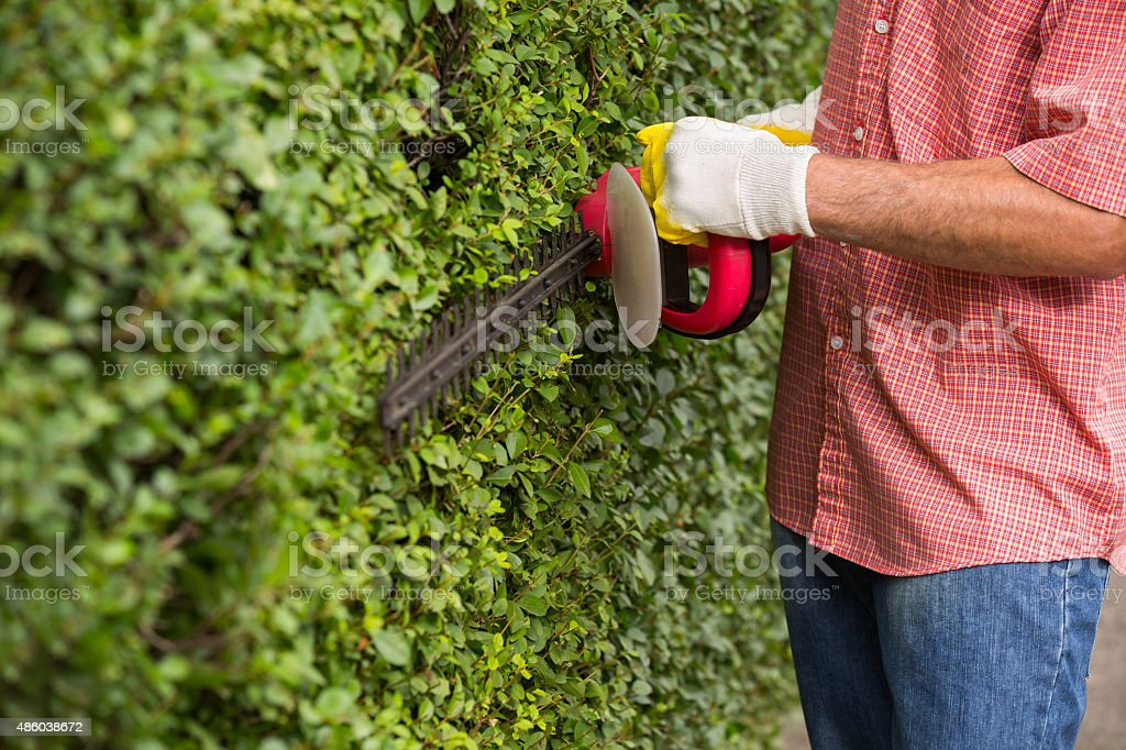 Man trimming hedge using strimmer stock photo