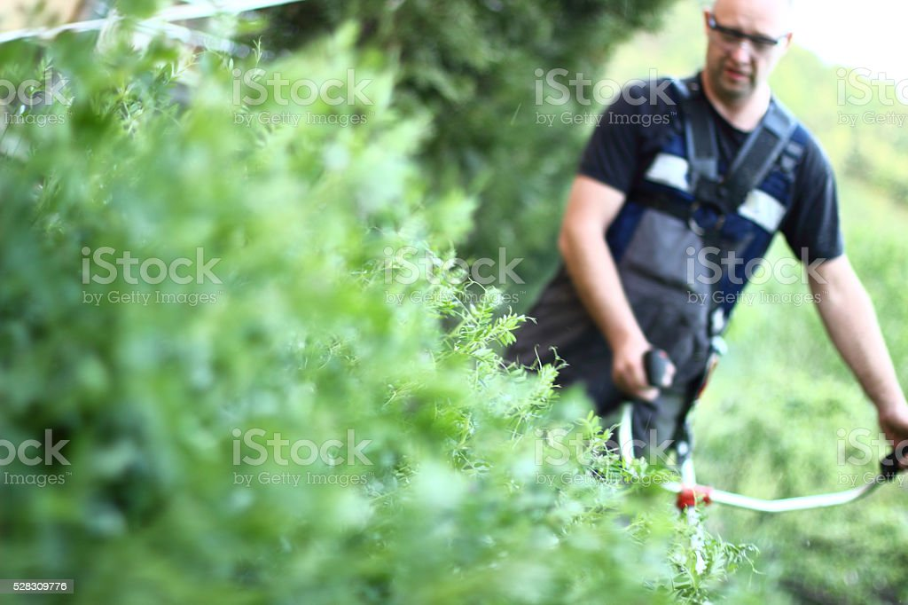 Man trimming stock photo