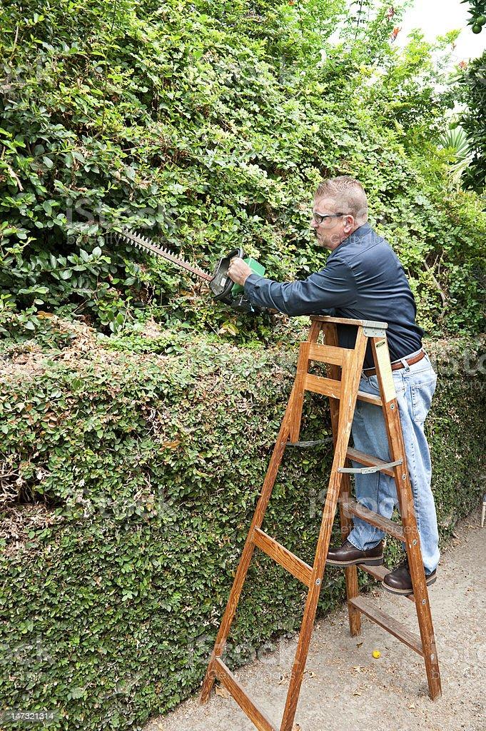 Man trimming vines royalty-free stock photo
