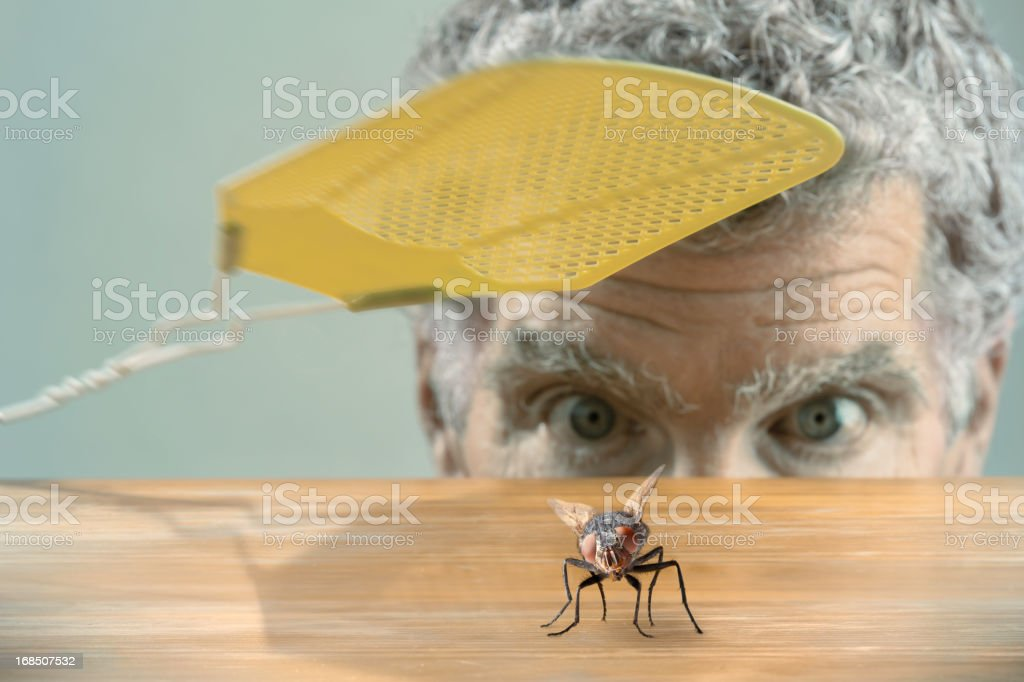 Man versus fly royalty-free stock photo