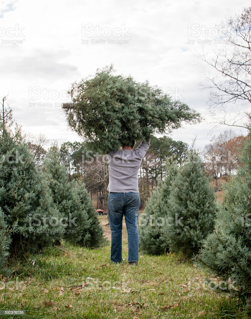 Man walking away with freshly cut Christmas tree stock photo