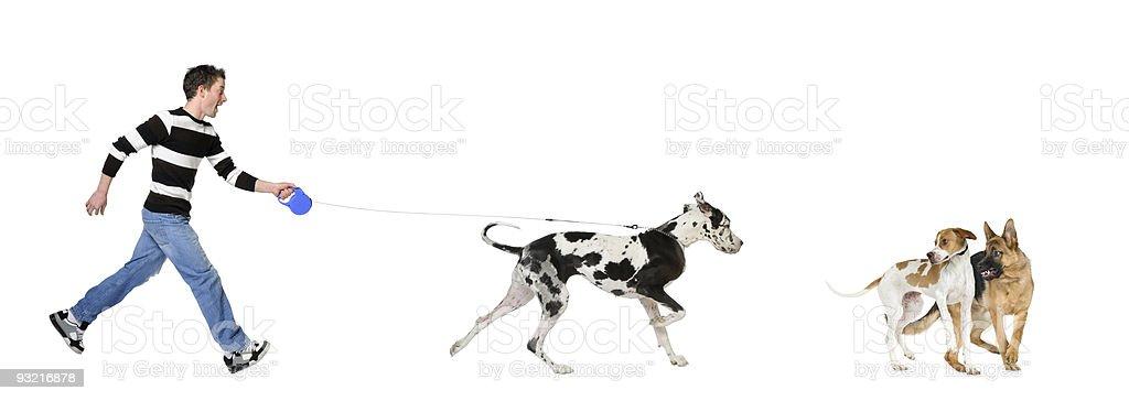 Man walking his dog (Great dane 4 years) stock photo