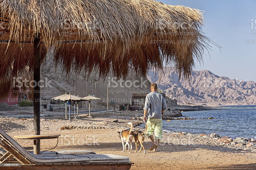 Man walking his dogs along  beach in Dahab royalty-free stock photo