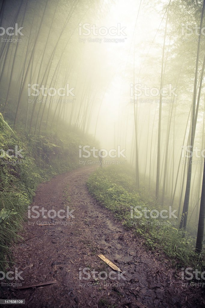 Man walking in foggy forest royalty-free stock photo