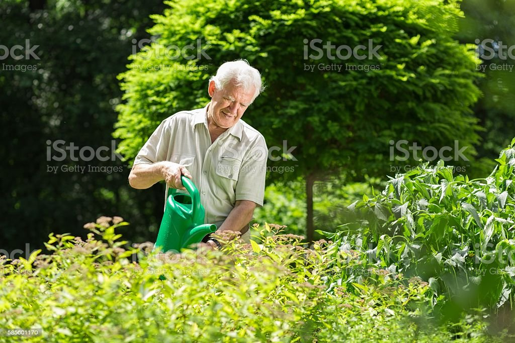 Man wartering the plants stock photo