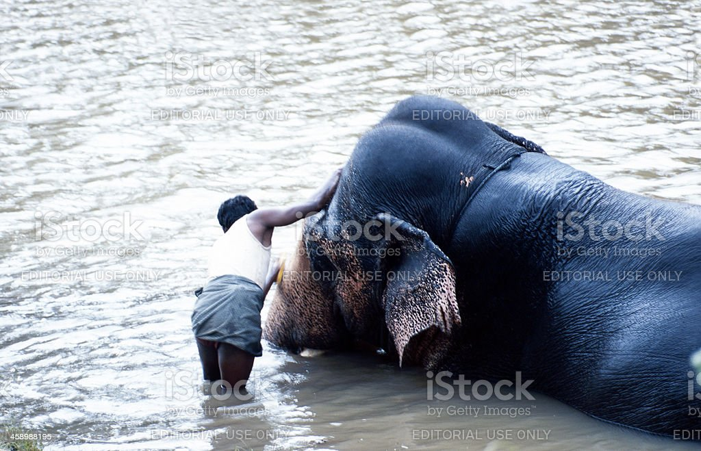 Man washing an elephant in a river stock photo