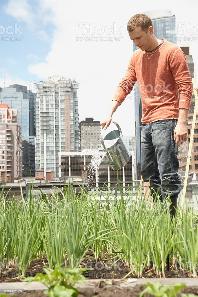 Man watering roof garden stock photo