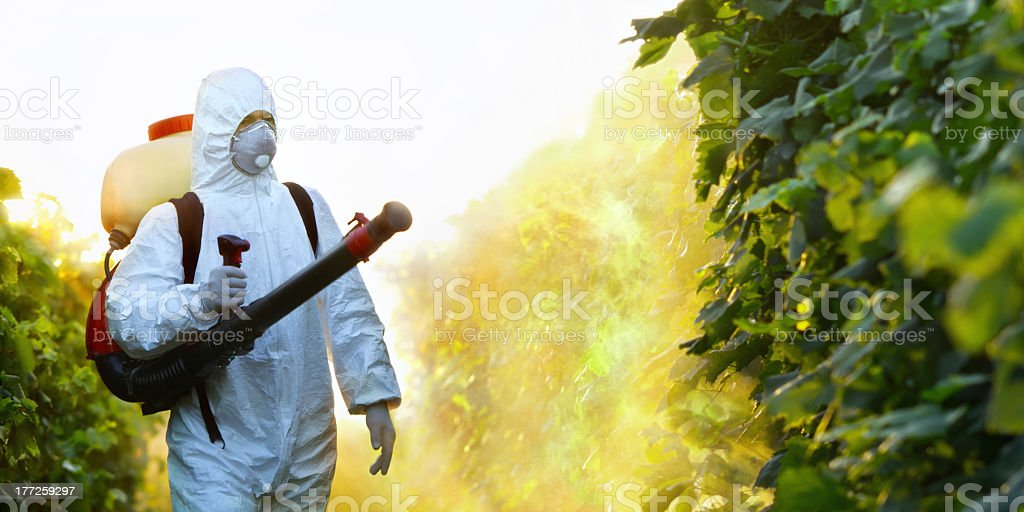 Man wearing white suit and protective mask spraying plants stock photo