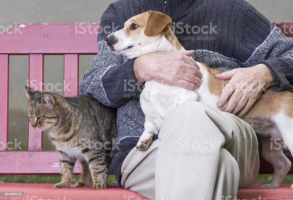 A man with a dog on his lap and a cat beside him stock photo
