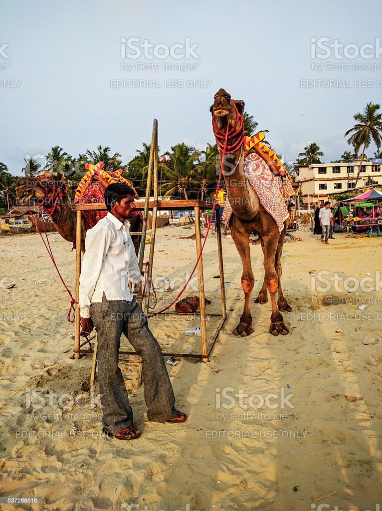 Man with camels at the beach stock photo