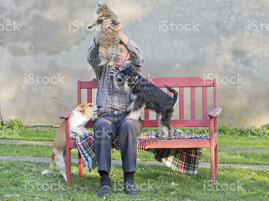 Man with cat and dogs stock photo