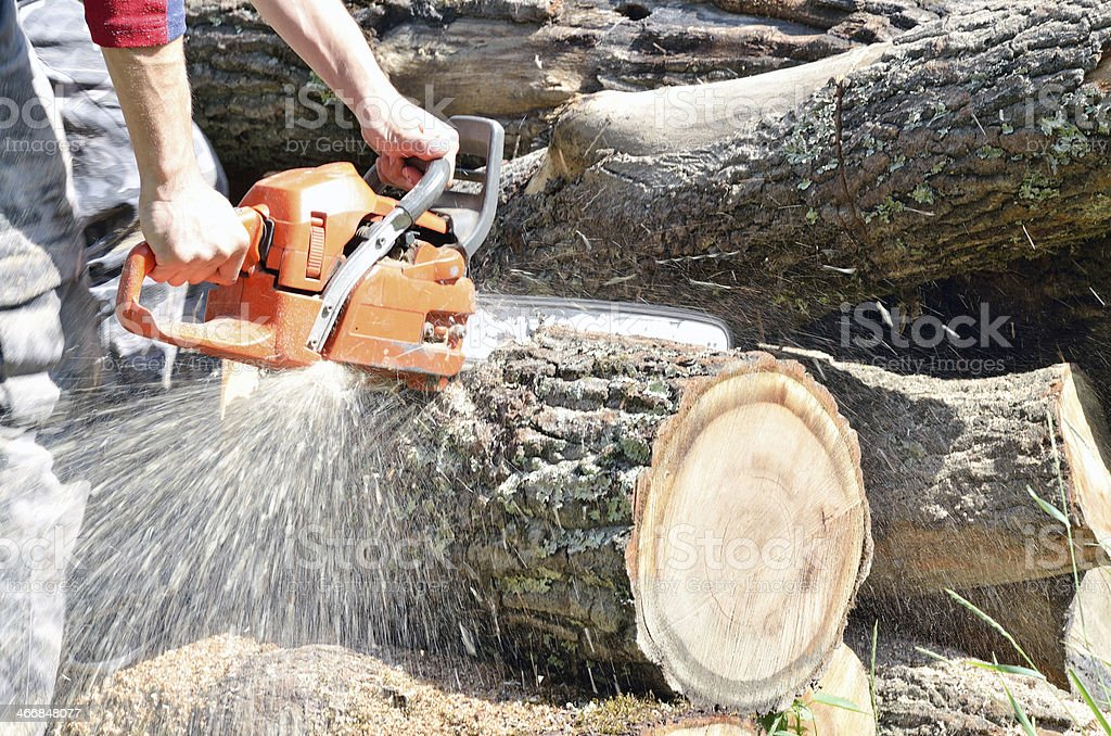 Man with chainsaw cutting the tree stock photo