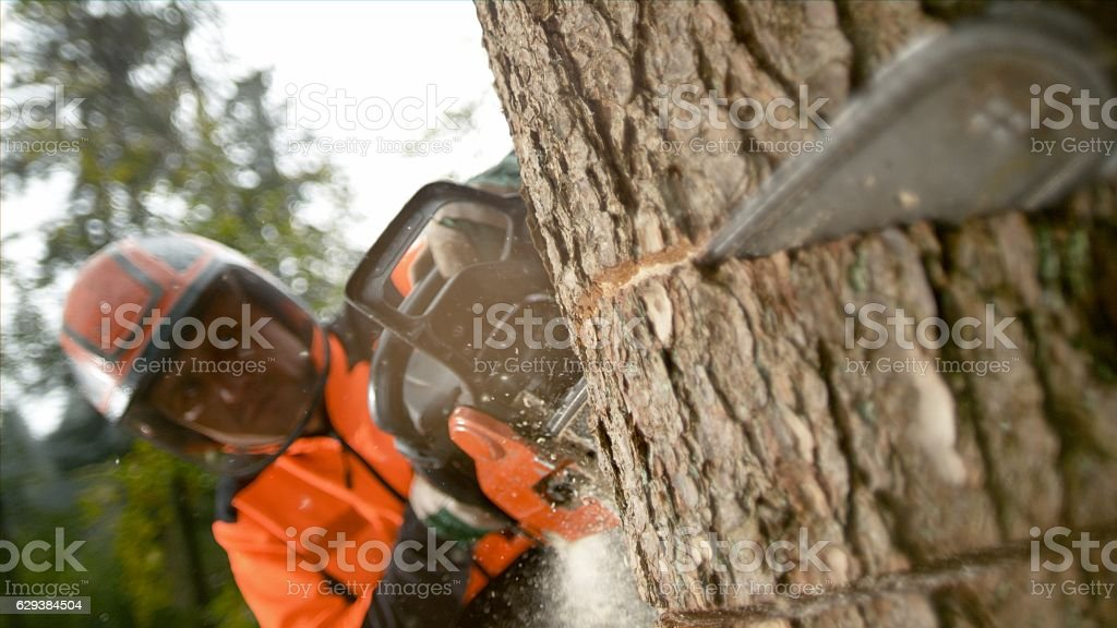 Man with chainsaw cutting tree trunk stock photo