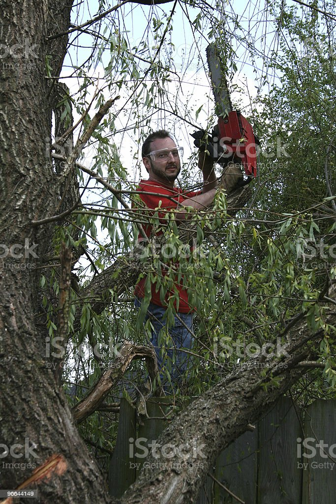 Man With Chainsaw In Fallen Willow Tree royalty-free stock photo