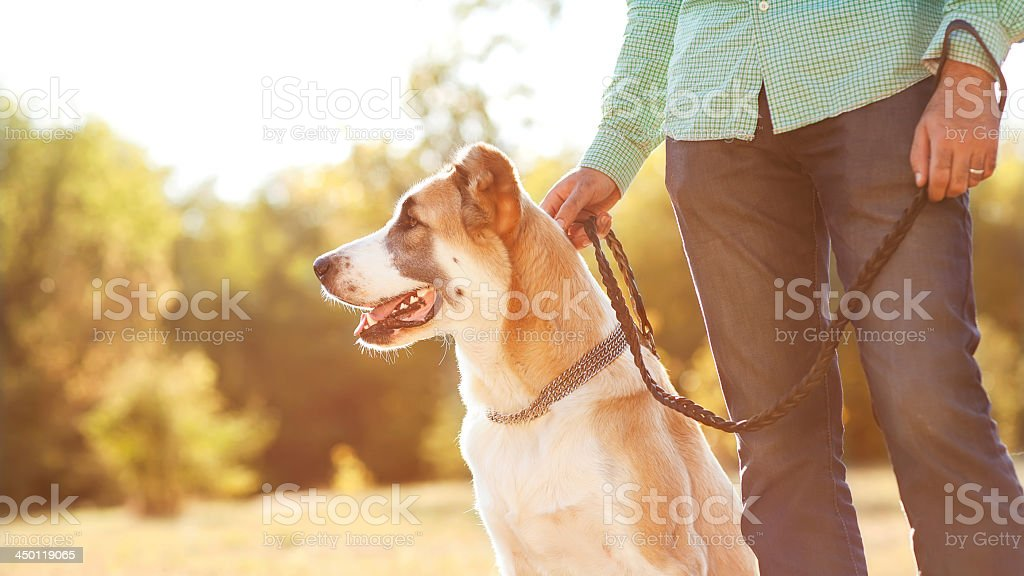 A man with his leased Central Asian shepherd at the park royalty-free stock photo
