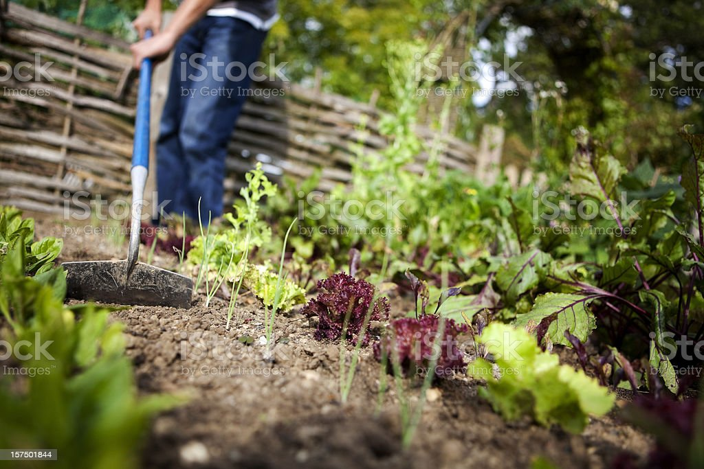 Man With Hoe in Vegetable Garden royalty-free stock photo