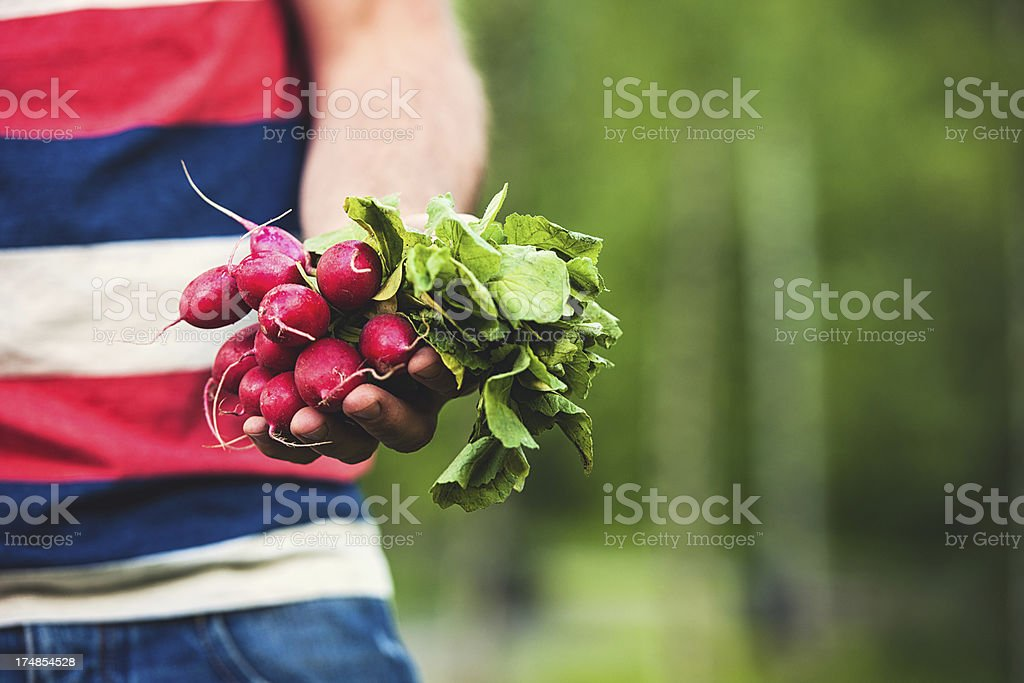 Man with homegrown radishes royalty-free stock photo