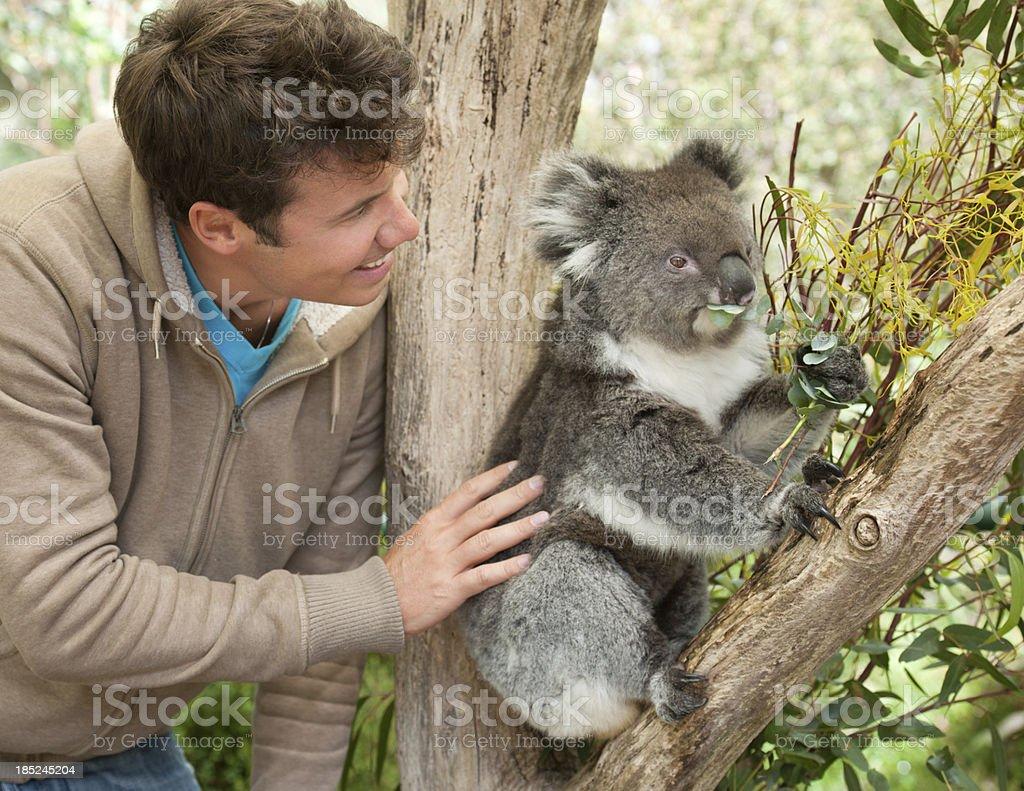 Man with Koala in wildlife (XXXL) royalty-free stock photo