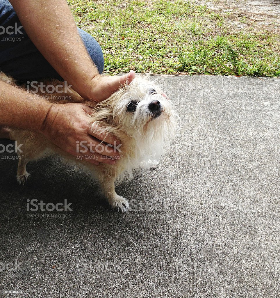 Man with little dog royalty-free stock photo