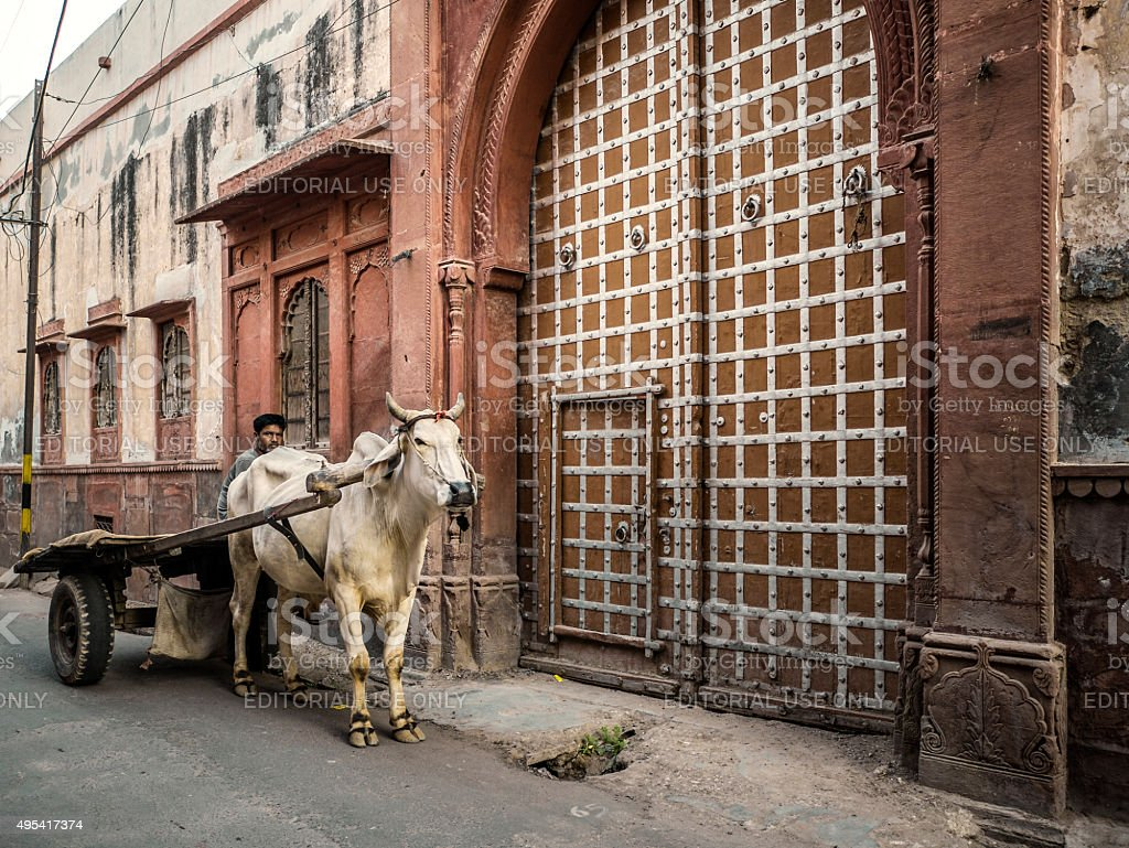 Man with ox pulling cart in Bikaner Rajasthan India stock photo
