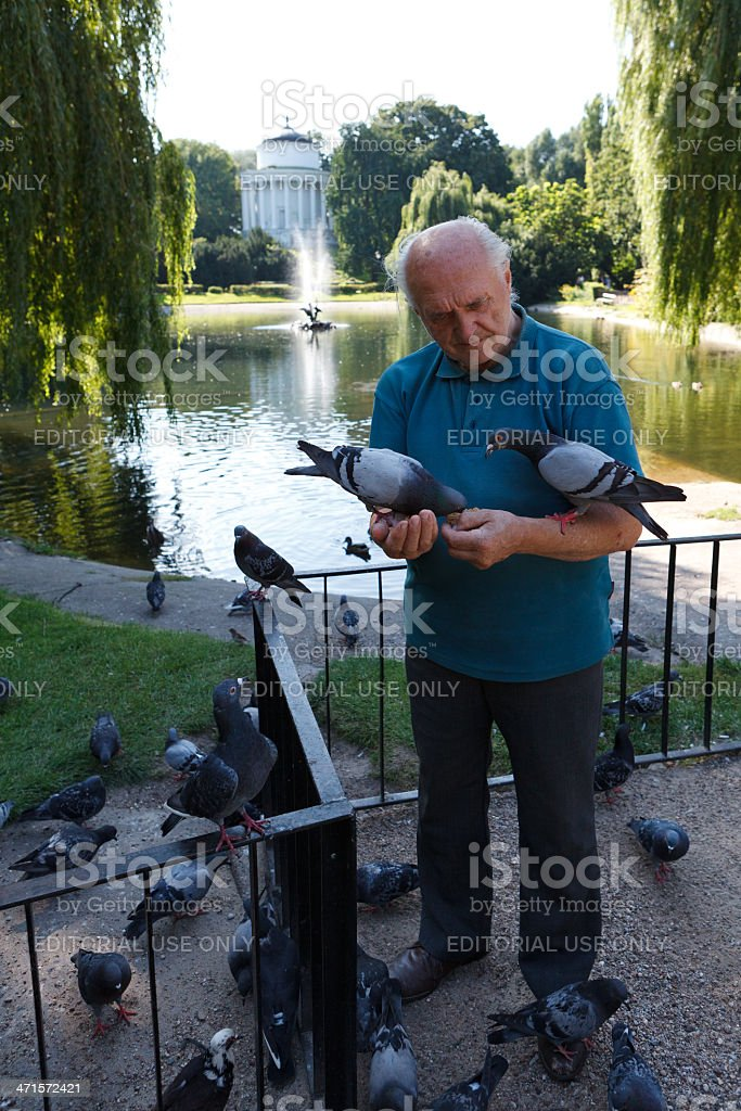 Man with pigeons royalty-free stock photo