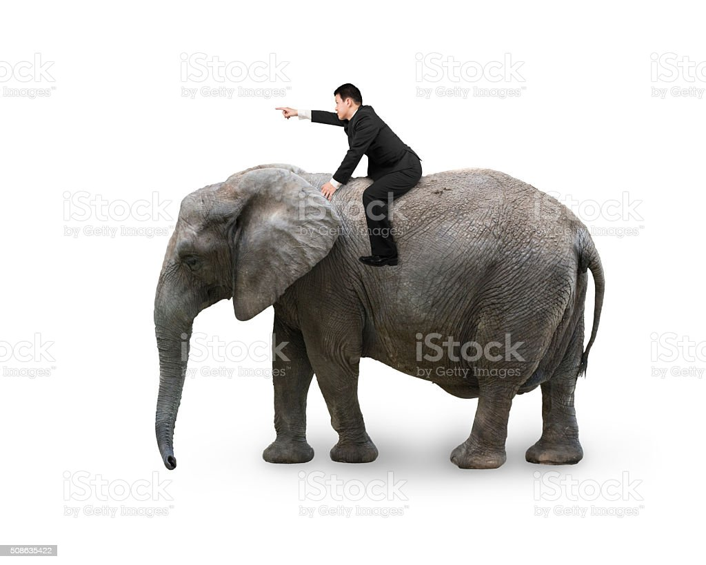 Man with pointing finger gesture riding on walking elephant stock photo