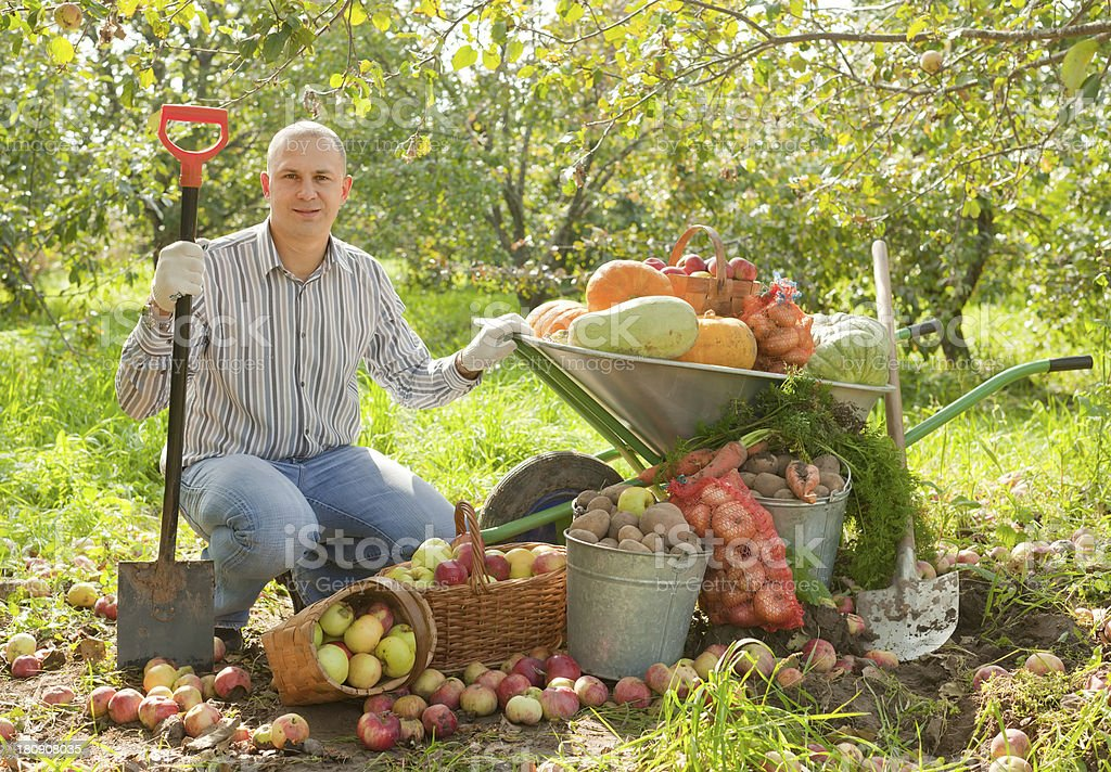 man with vegetables harvest stock photo
