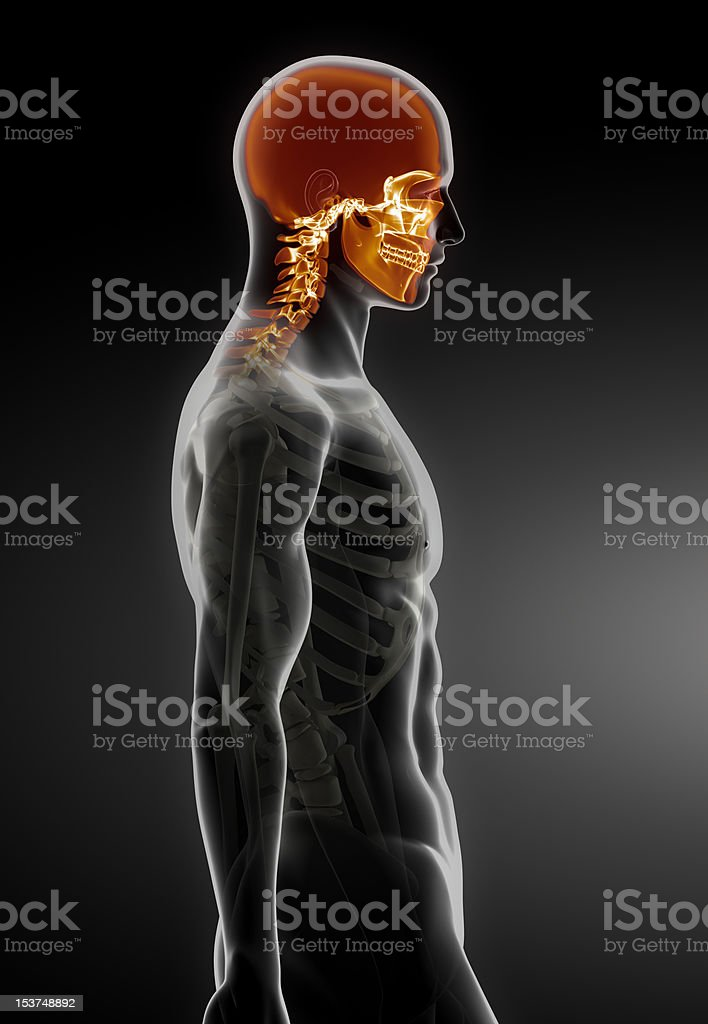 Man with visible skull and cervical spine part stock photo