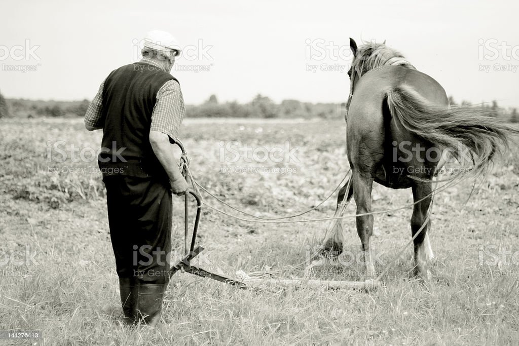 Man with working horse royalty-free stock photo