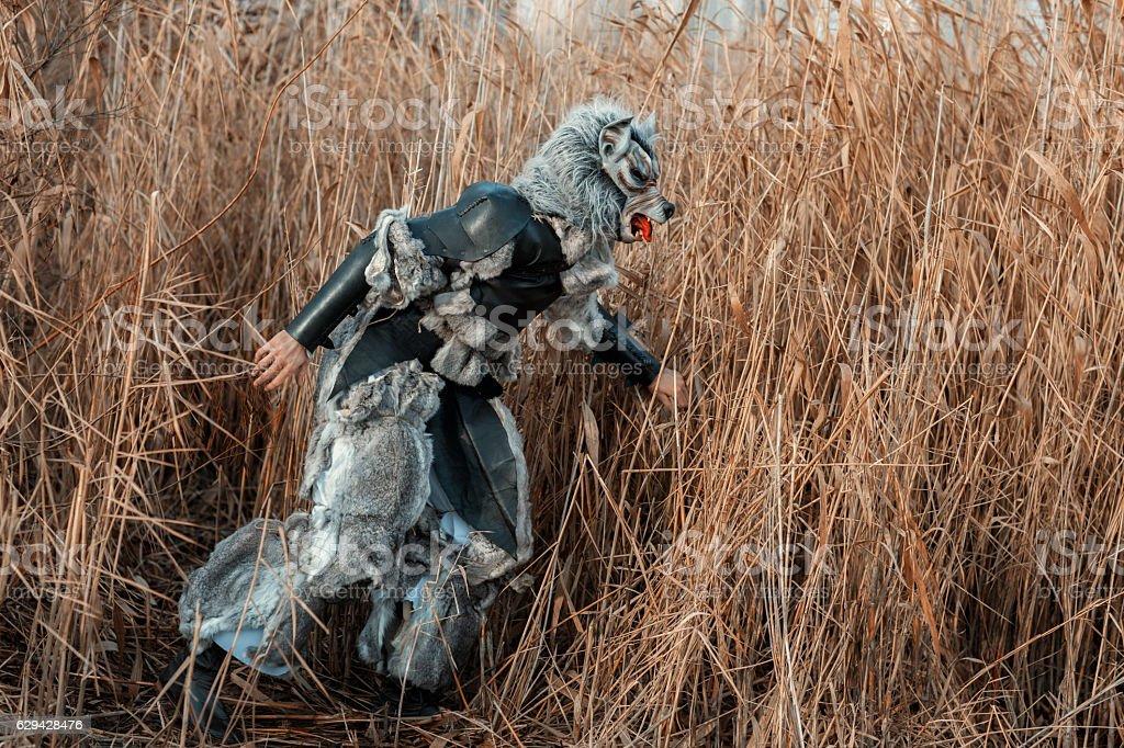 Man wolf werewolf in the grass. stock photo