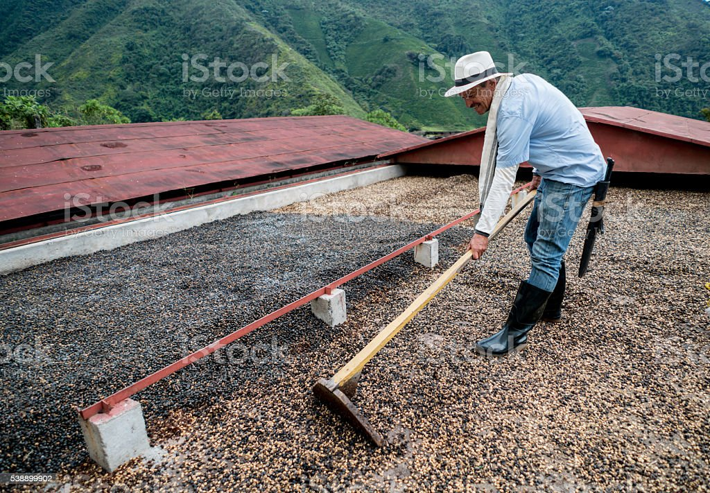 Man working at a Colombian coffee farm stock photo