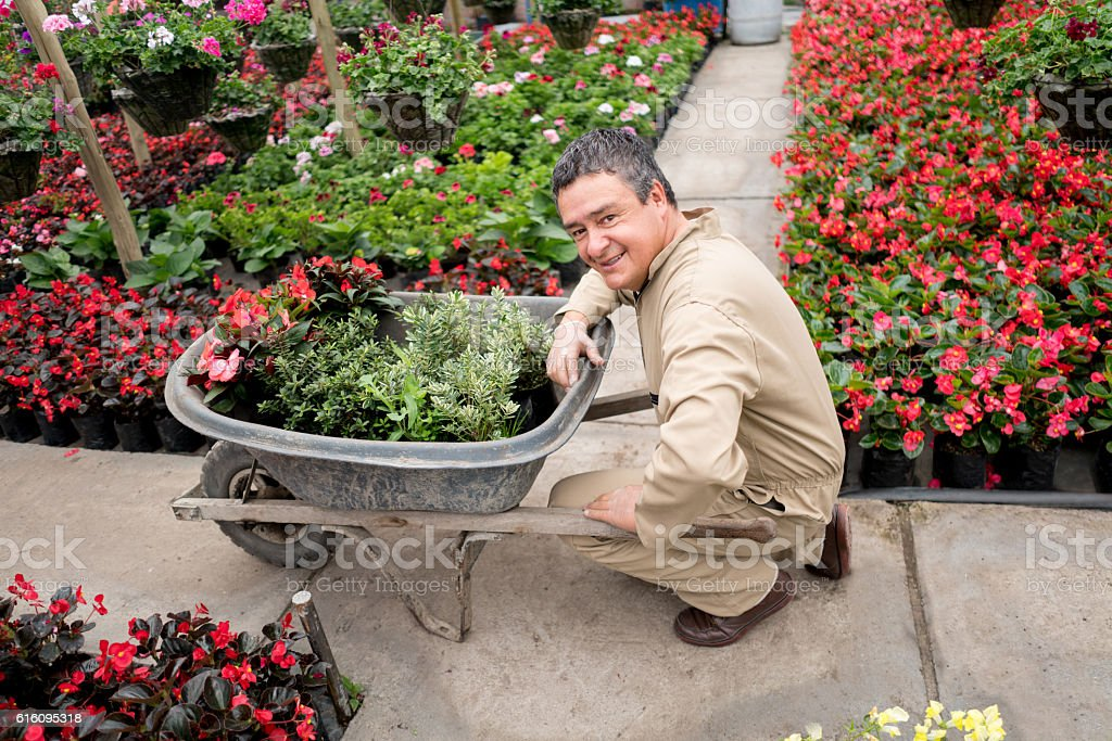 Man working at a green house stock photo