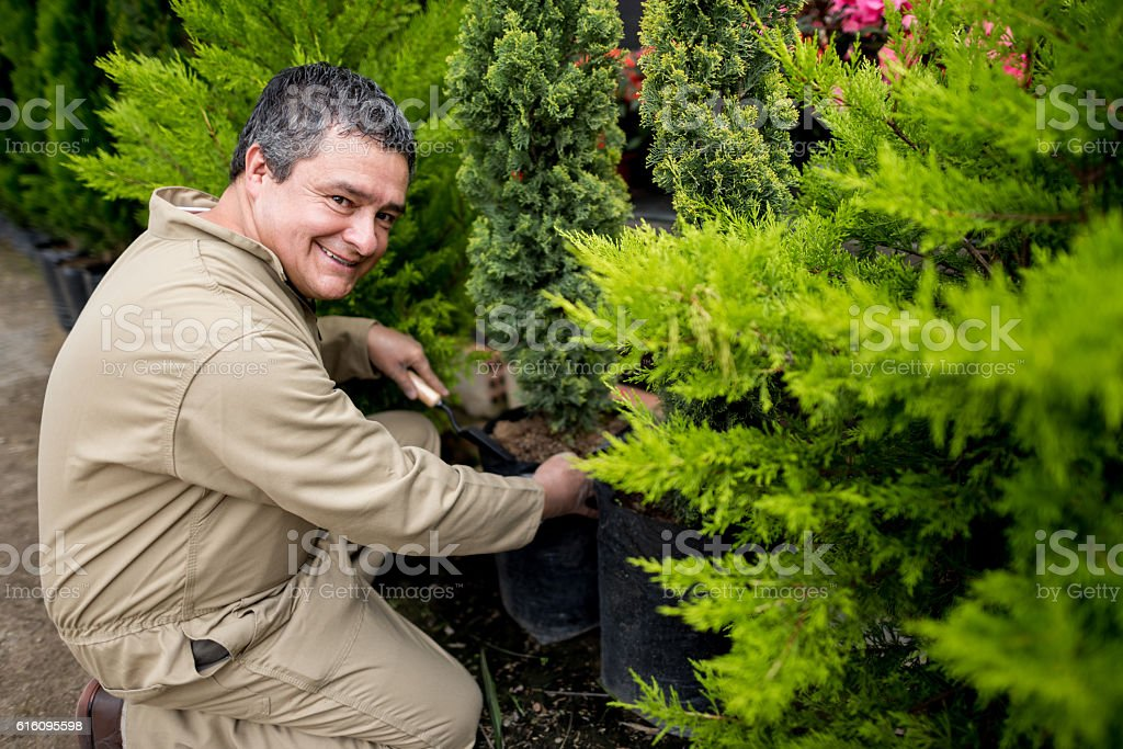 Man working at a greenhouse stock photo