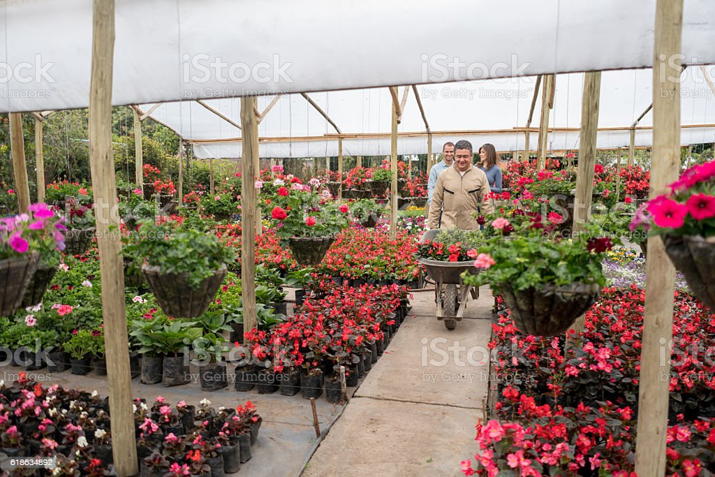 Man working at a greenhouse selling plants stock photo