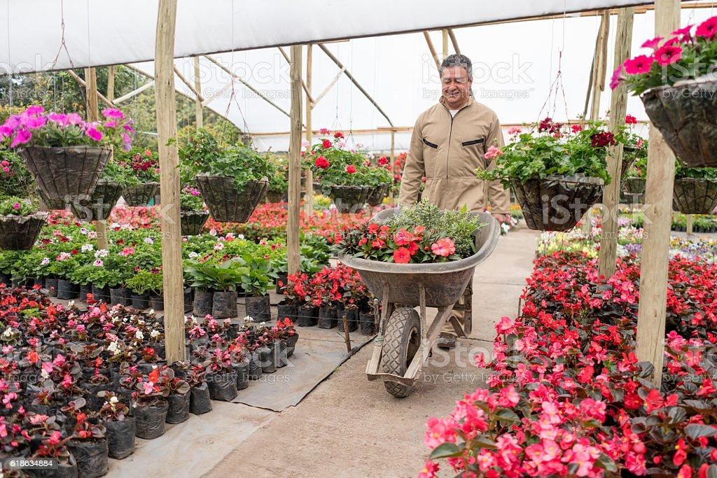 Man working in a garden center stock photo