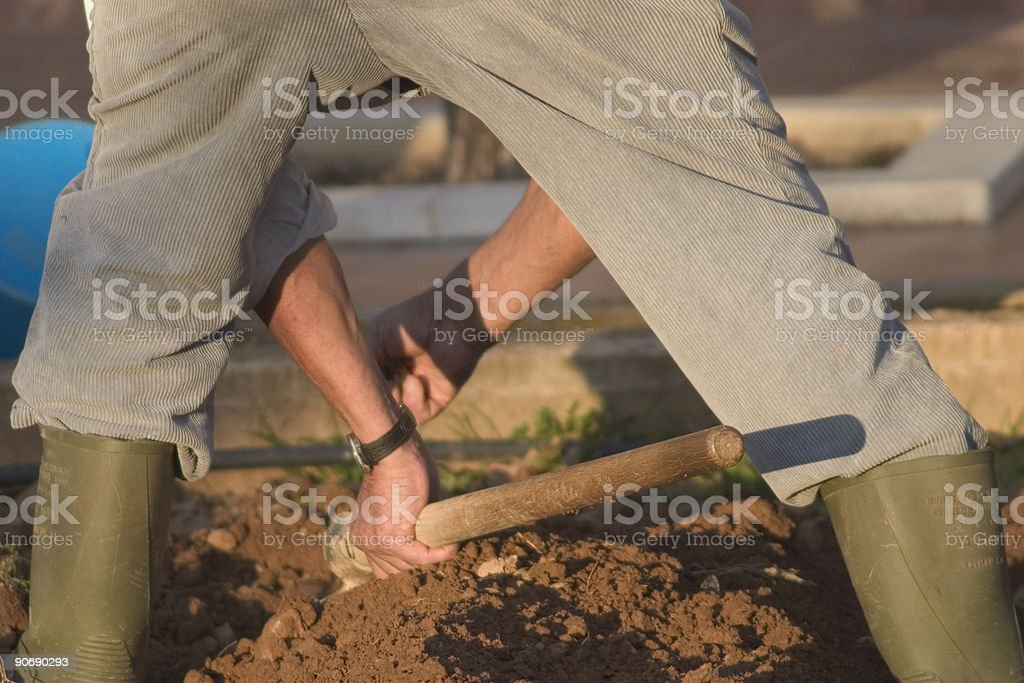 Man working in a vegetable garden royalty-free stock photo