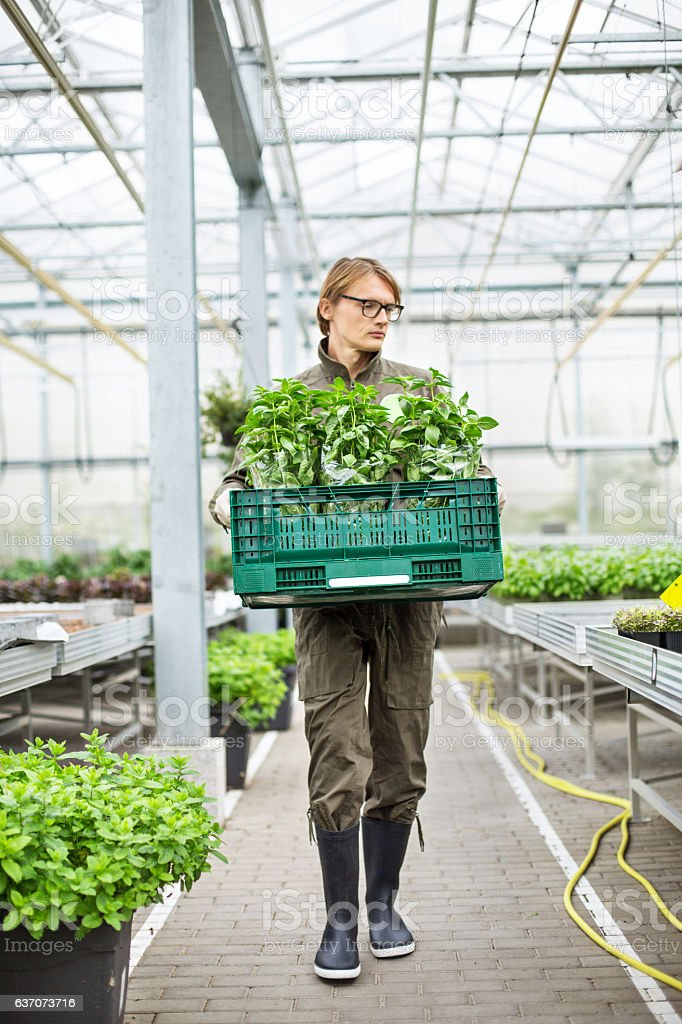 Man working in greenhouse stock photo