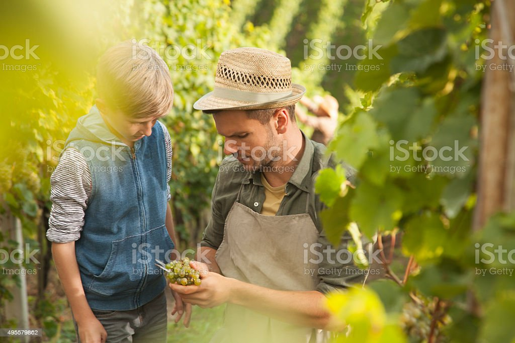 Man working in vineyard stock photo