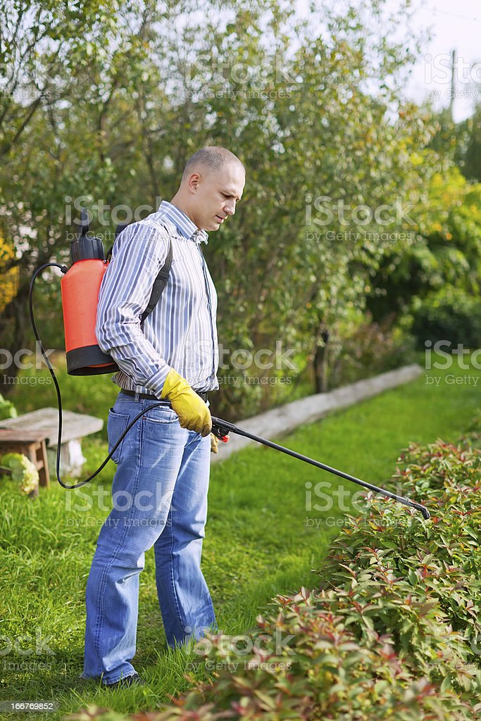 Man works with garden spray stock photo