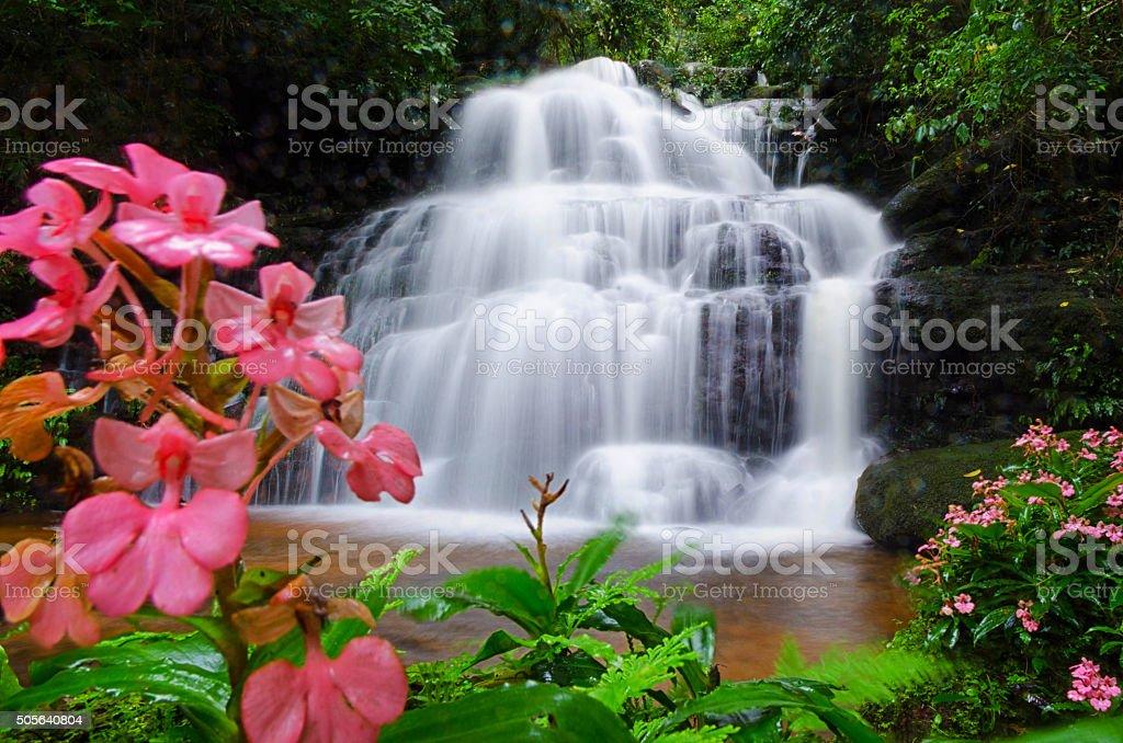 Mandang waterfall ,Thailand,flower stock photo
