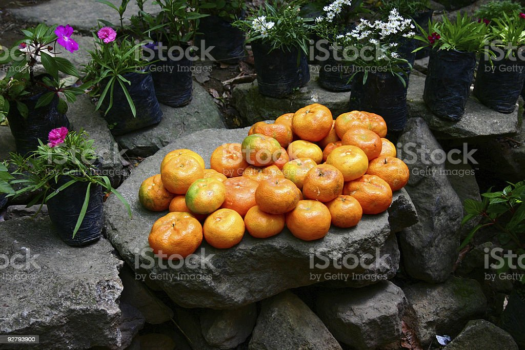 Mandarin Oranges royalty-free stock photo
