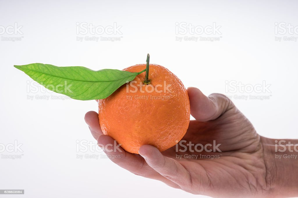 mandarin with Leafs stock photo