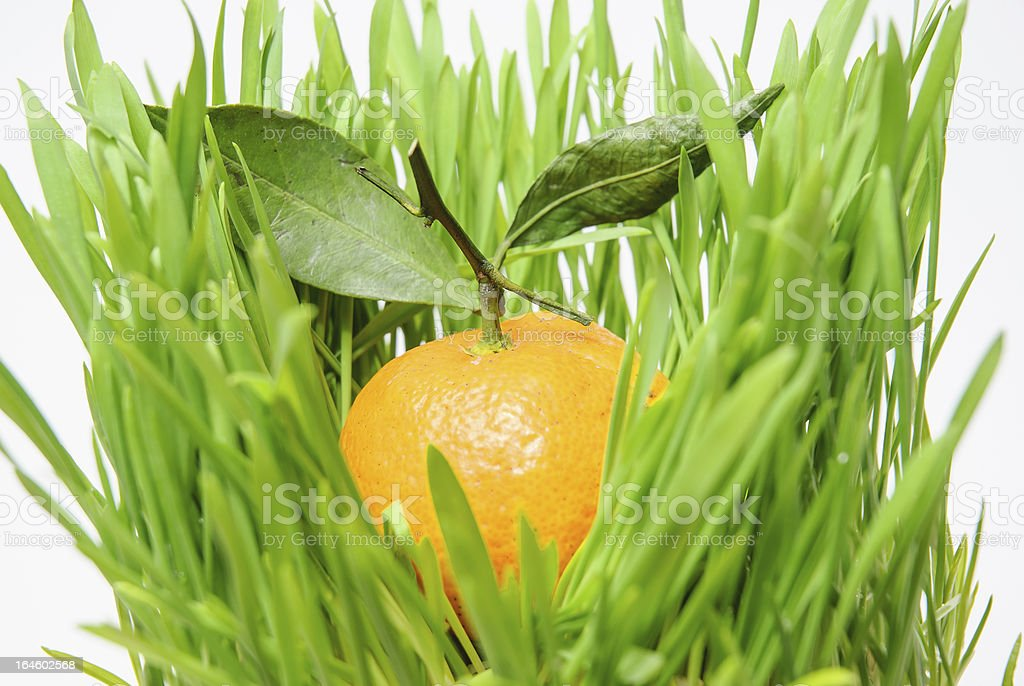 Mandarin with leaves in green grass royalty-free stock photo