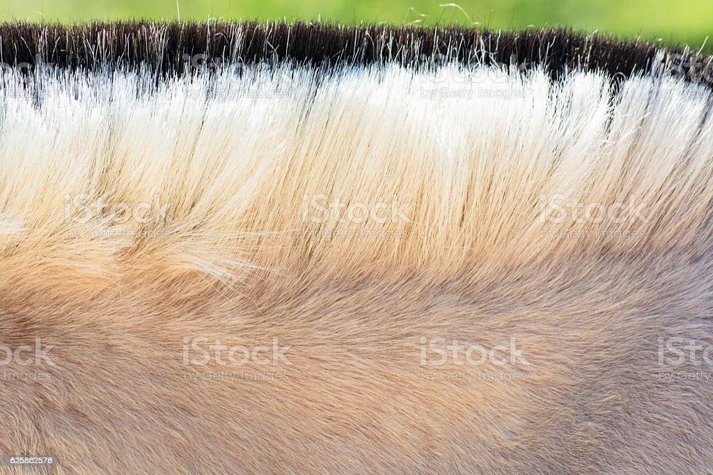 Mane of a pony. stock photo